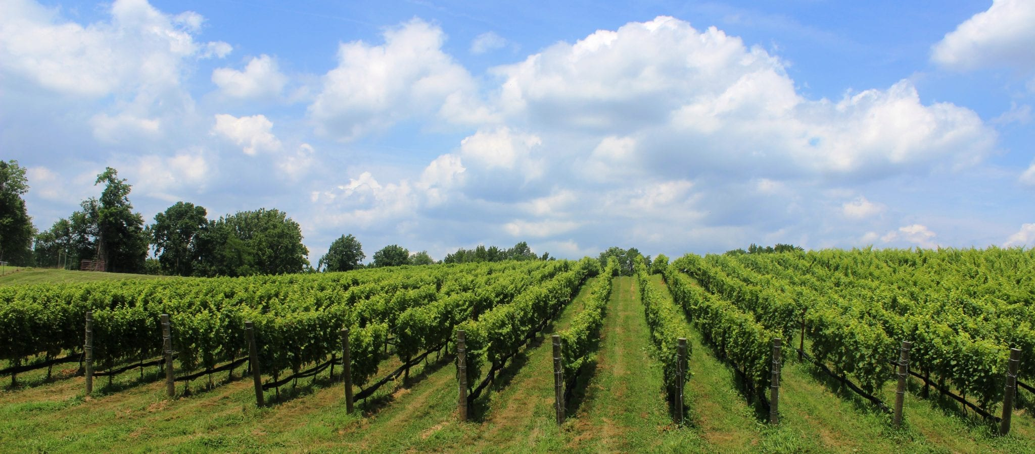 The Birthplace Of American Wine The Untold Story Behind
