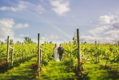 vineyard shot