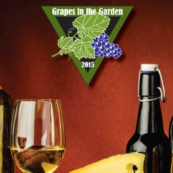 grapes in the garden 2015