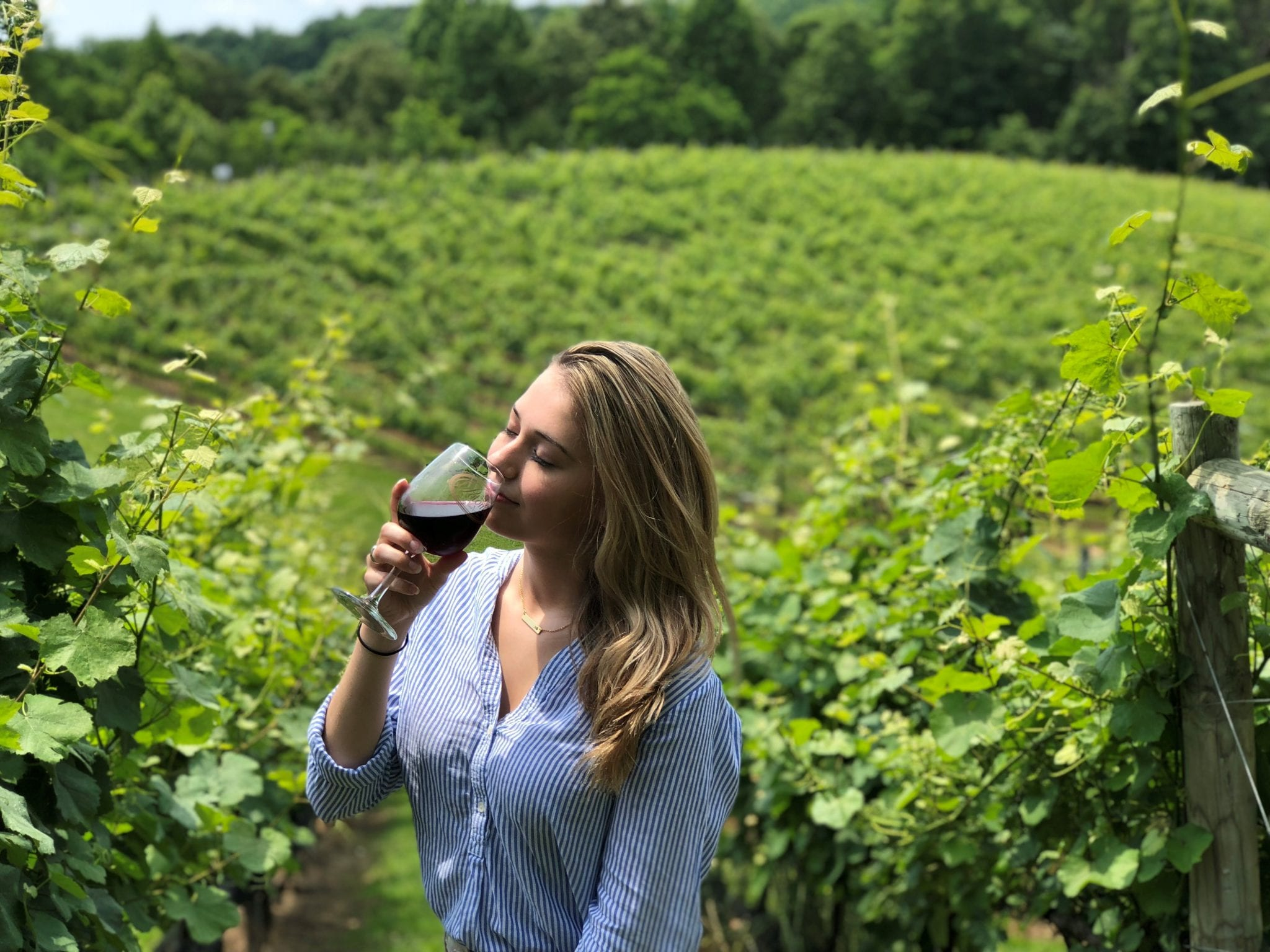 Sniffing wine in the vineyard